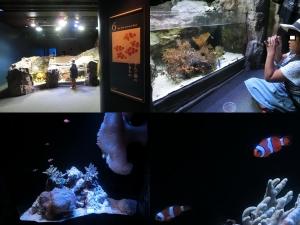 京都水族館14