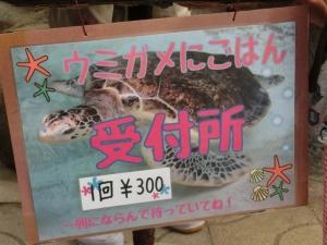 あわしまウミガメ