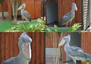 掛川鳥16