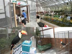 掛川鳥17-1