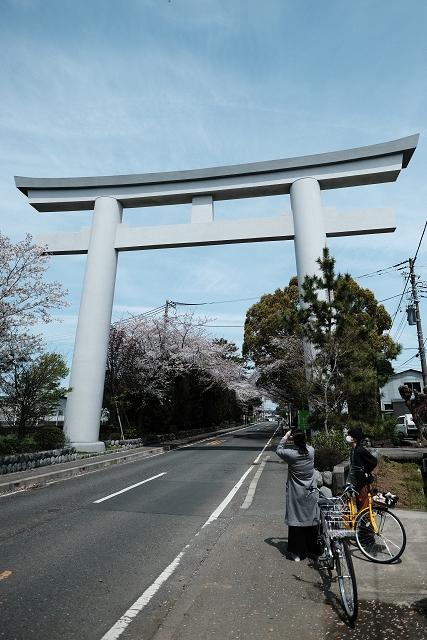 XF1428Rと寒川神社の桜