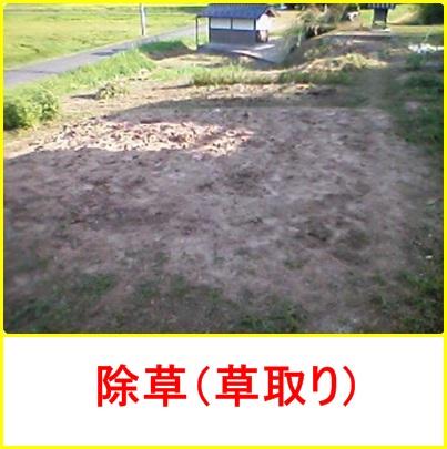 8月31日除草(草取り)
