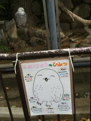 白フクロウ