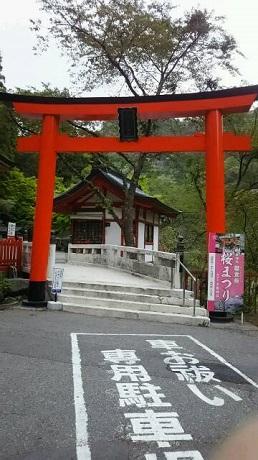 前原黄桜1