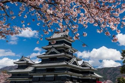 松本城 桜01 (1 - 1DSC_0003)_R