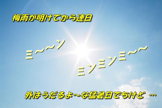 1_201607192053102a9.jpg