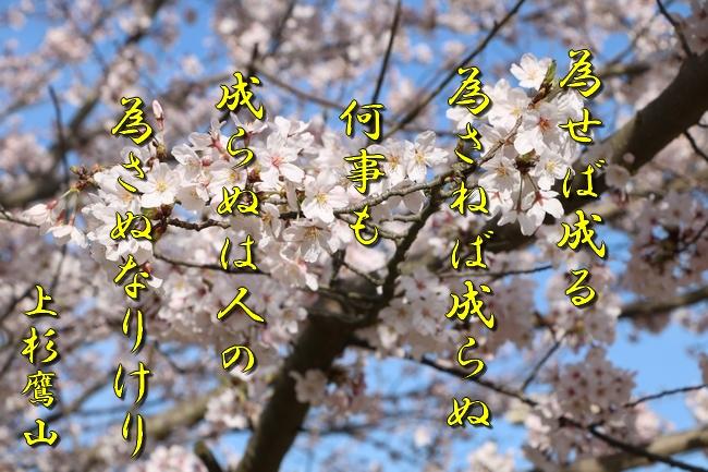 明石城公園桜2016 179