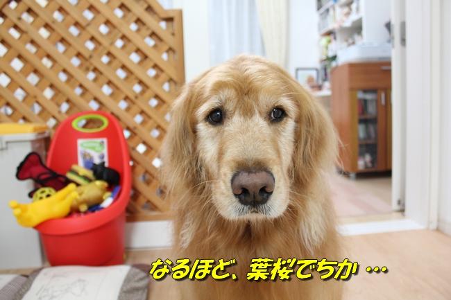 表情本屋大賞 020