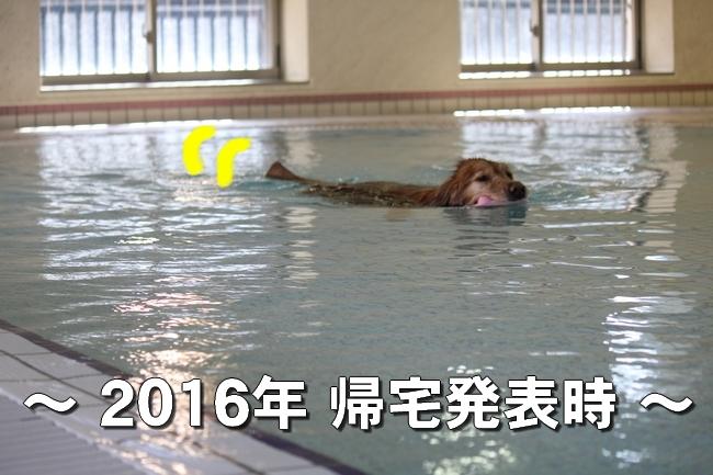 プール解禁 040