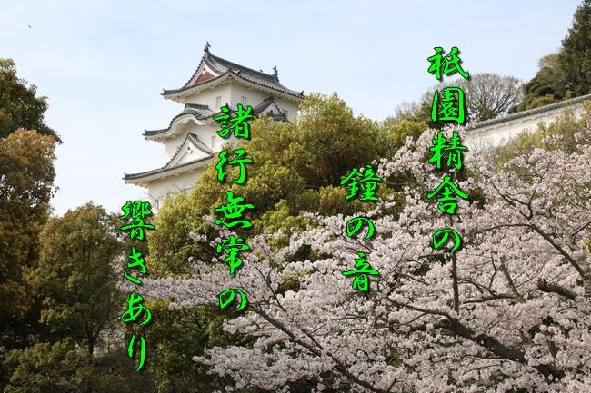 明石城公園桜2016 017