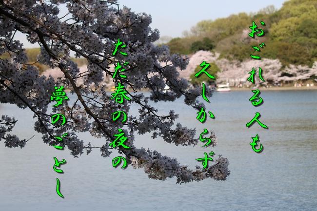 明石城公園桜2016 059