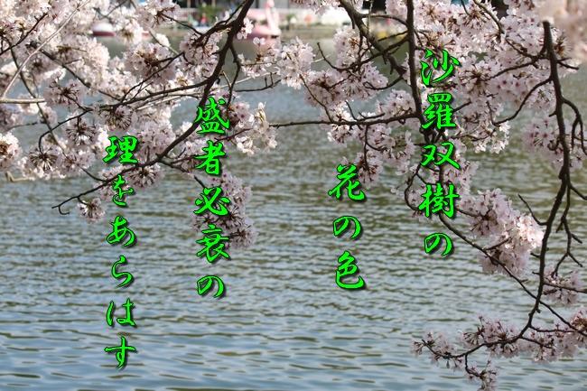 明石城公園桜2016 097