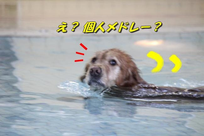 泳ぎ納め 026
