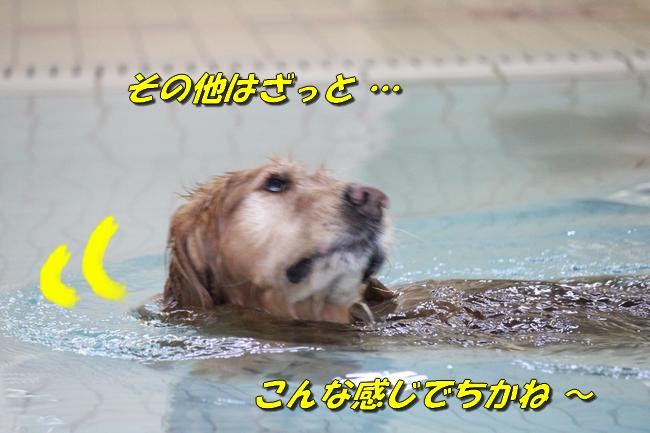 泳ぎ納め 029