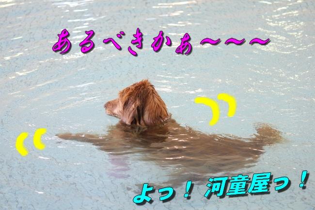 プール解禁 080