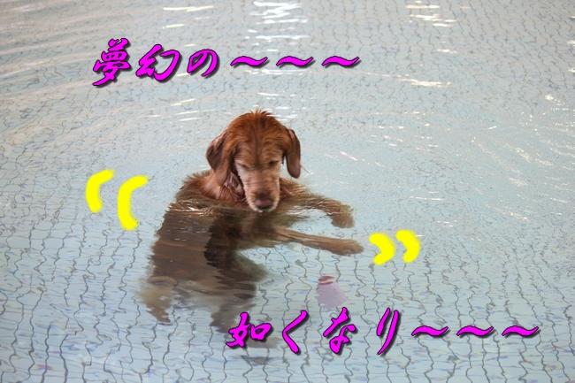 プール解禁 084