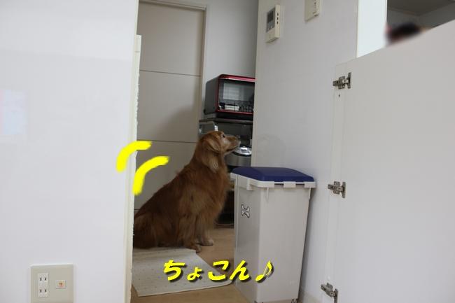 キッチン覗き 012
