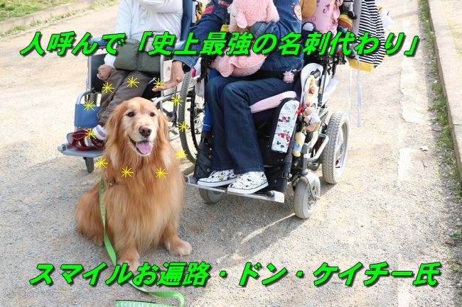 明石城公園桜2016 272