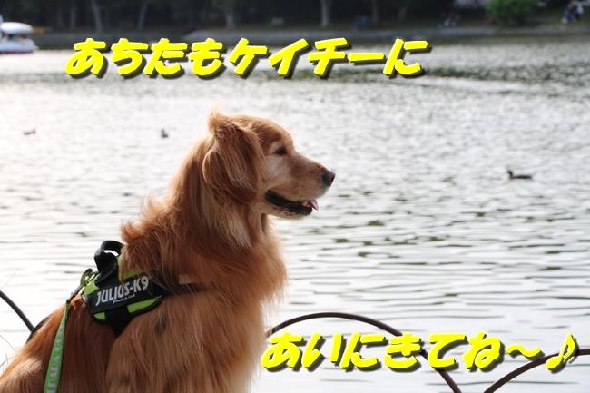 明石城公園桜2016 282