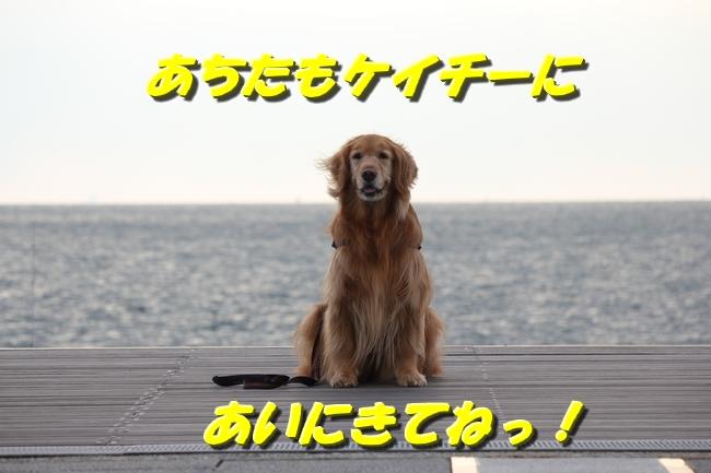大蔵海岸 123