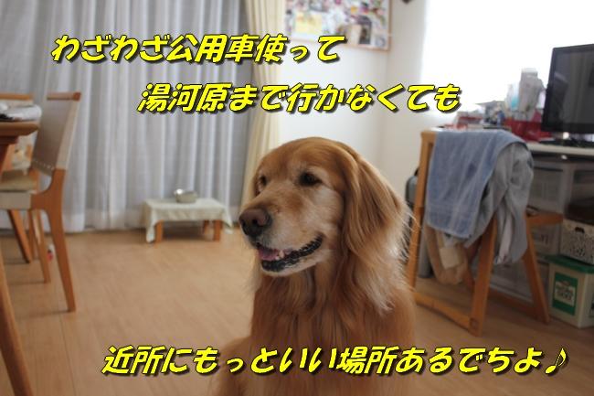表情 006