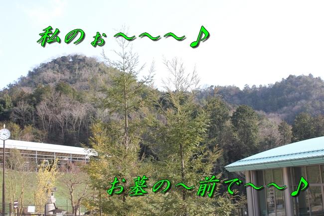 シャンプー 061