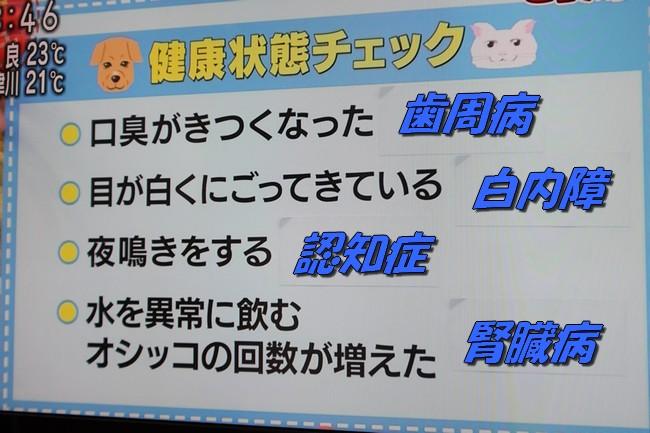 朝イチテレビ 010