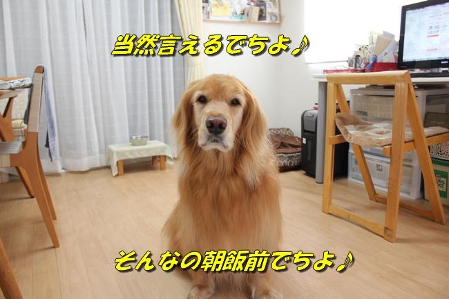 阪神新聞 006