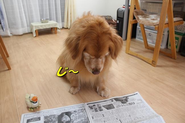 阪神新聞 011