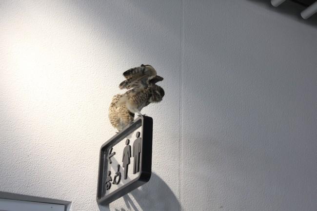 オペとエキスポシティ 159