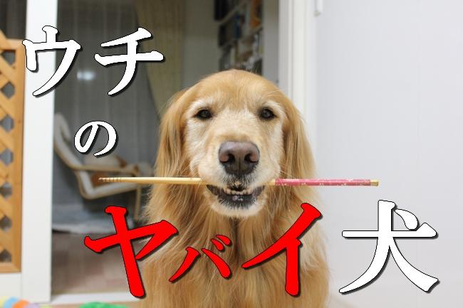 菜箸ヤバい妻 031