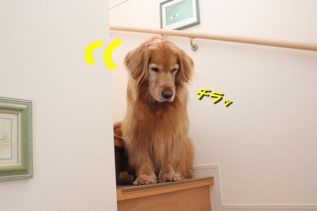 チェア階段 071