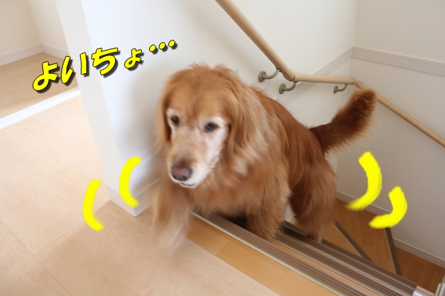 チェア階段 006