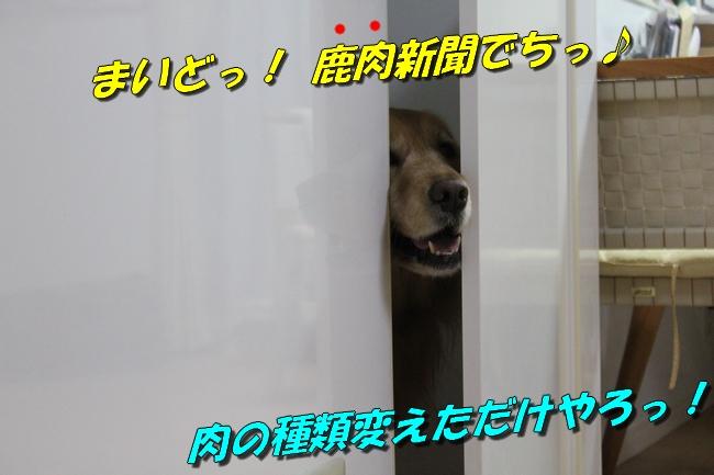 扉ASIMO会話 パターン2-2