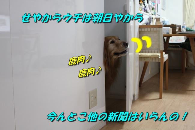 扉ASIMO会話 パターン2-3