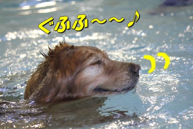 ケイティ2週間ぶりのプール 062