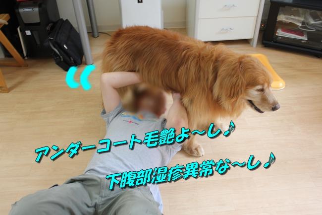 犬整備士 003