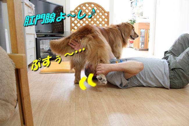 犬整備士 008