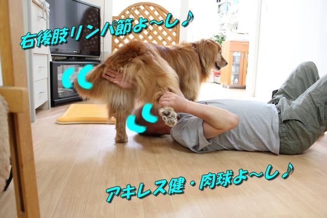 犬整備士 009