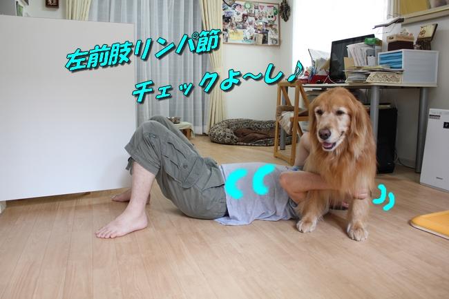 犬整備士 012