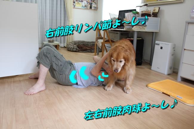 犬整備士 015