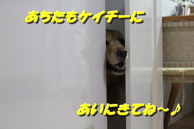 扉ASIMO会話 027