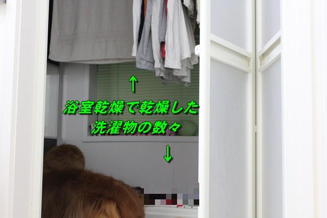 表情洗濯物 029