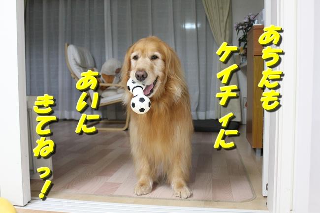 扉パピレバー 009