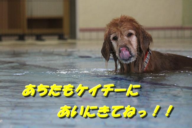 プールぶりイチロー 089