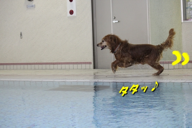 プールぶりイチロー 013