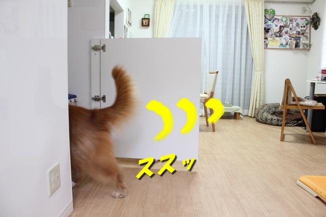 キッチン覗き 011