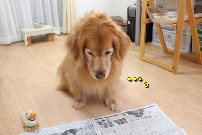 阪神新聞 013