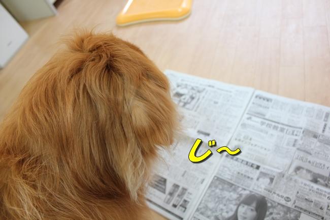 阪神新聞 014