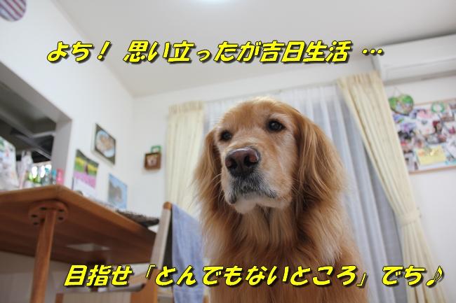 阪神新聞 028